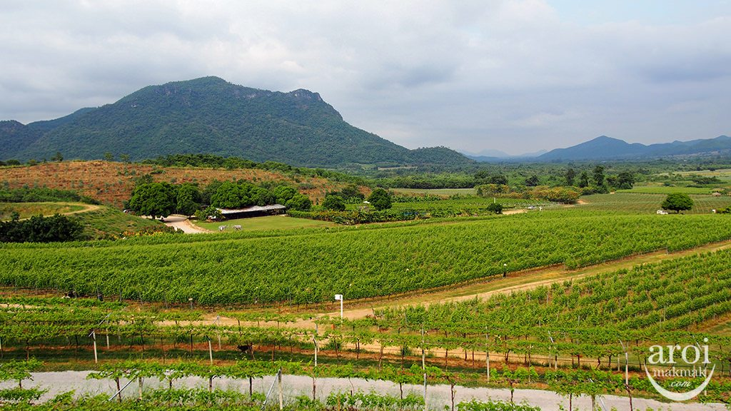 huahinhills-vineyard1