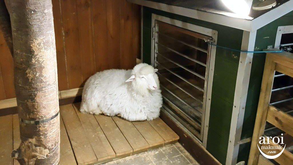 thanksnaturecafe-sheep1