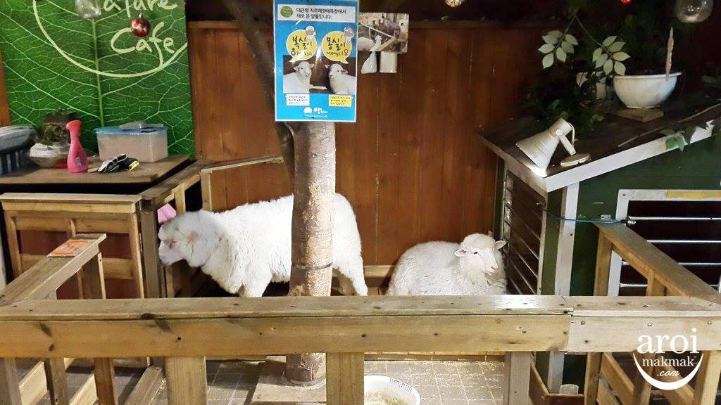 thanksnaturecafe-sheep2