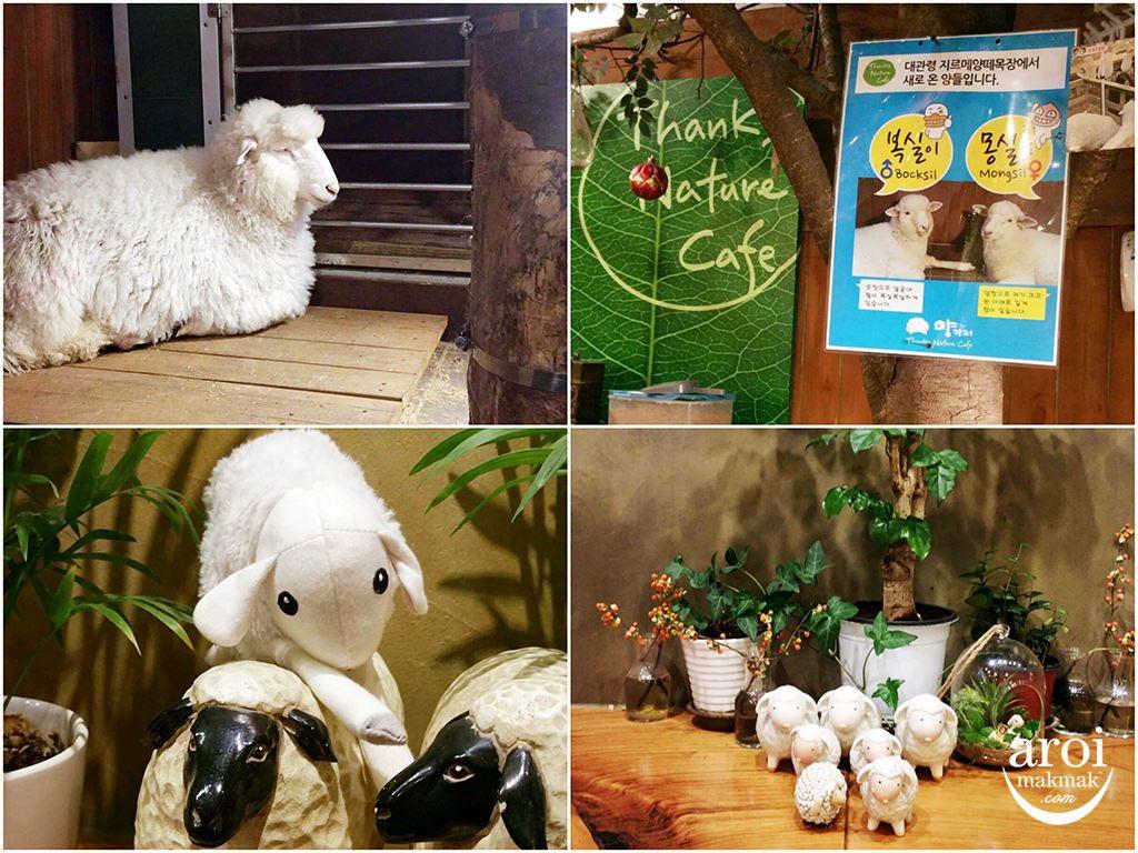 thanksnaturecafe-sheep3