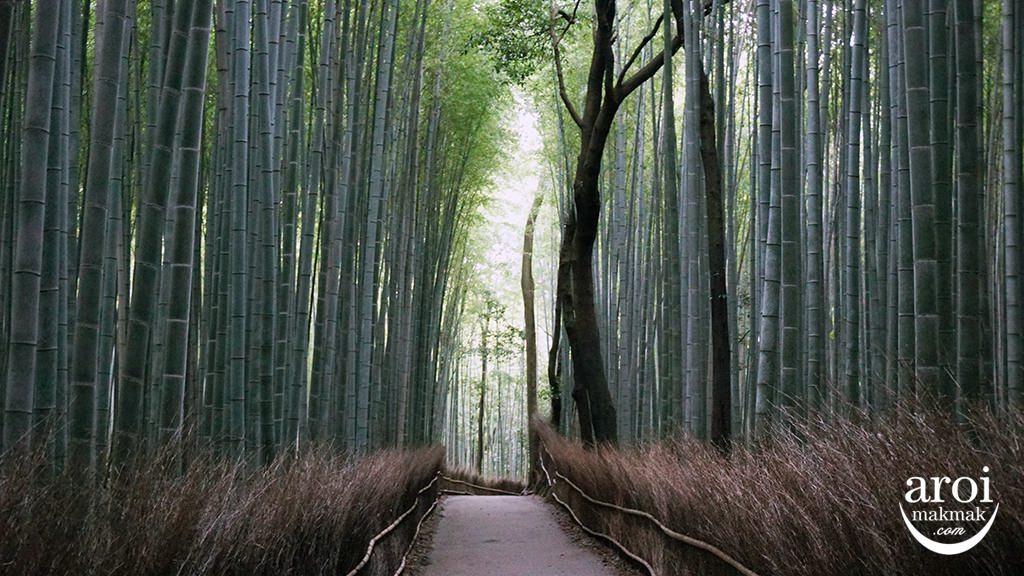 Kyoto_ArashiyamaBambooForest1