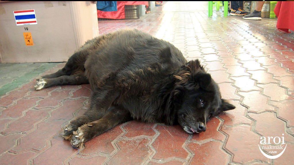 anusarnnightmarket-dog