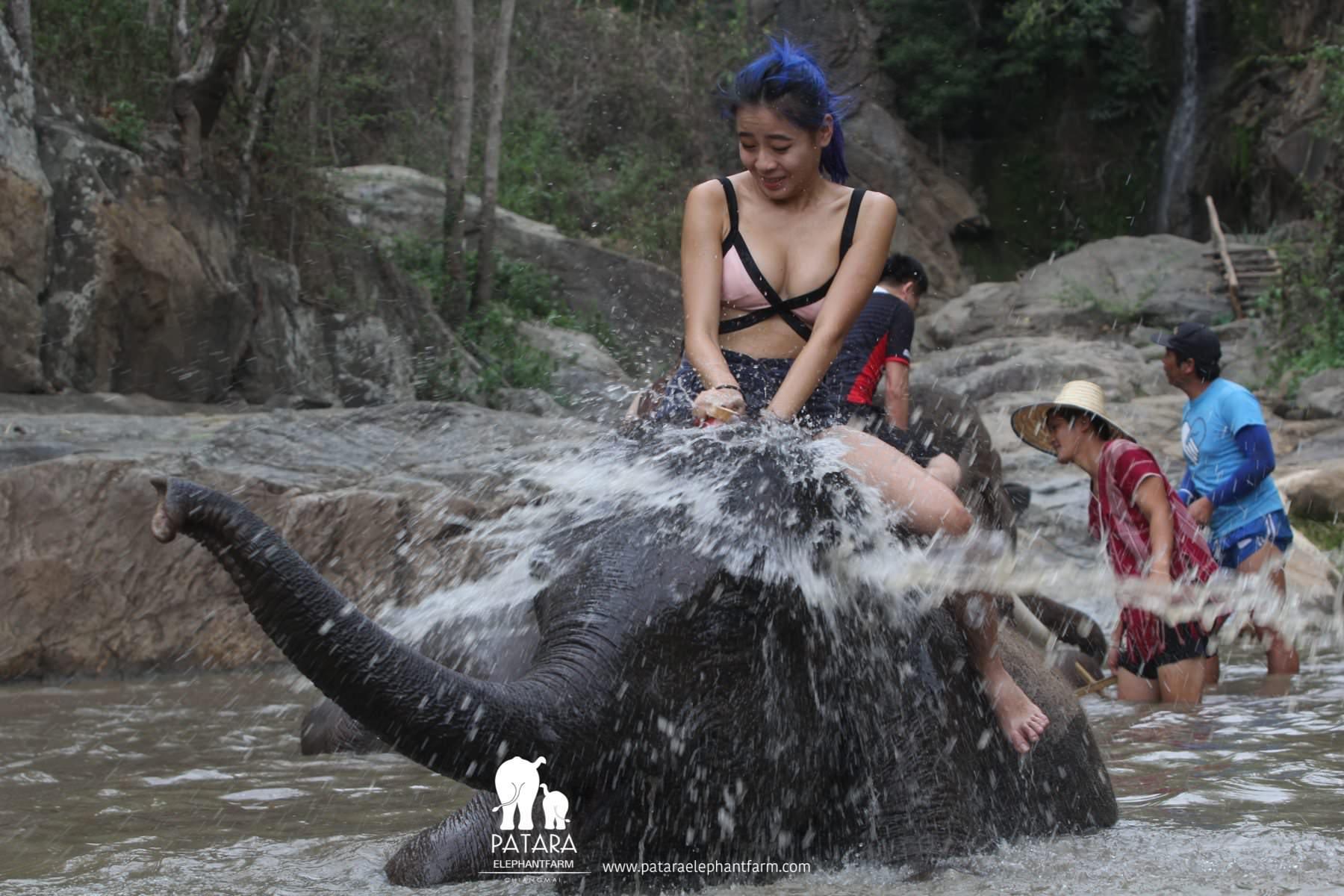 PataraElephantFarm-ChiangMai-Bath