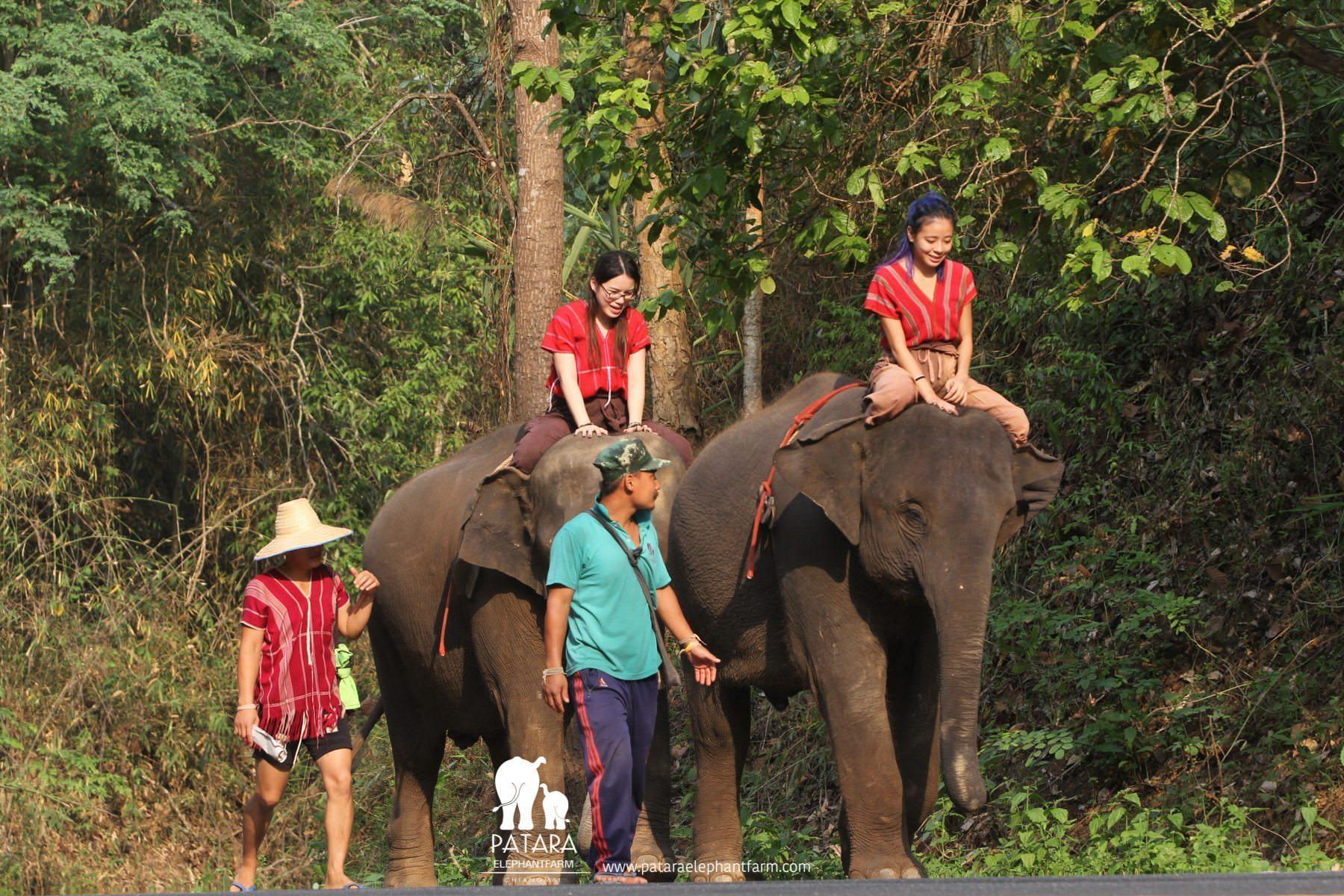 PataraElephantFarm-ChiangMai-Barebackride