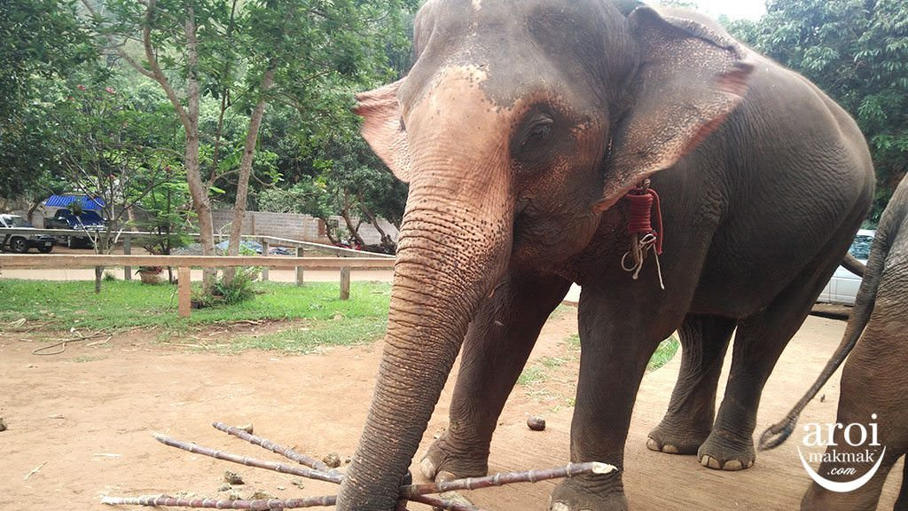 pataraelephantfarm-elephantandbamboo