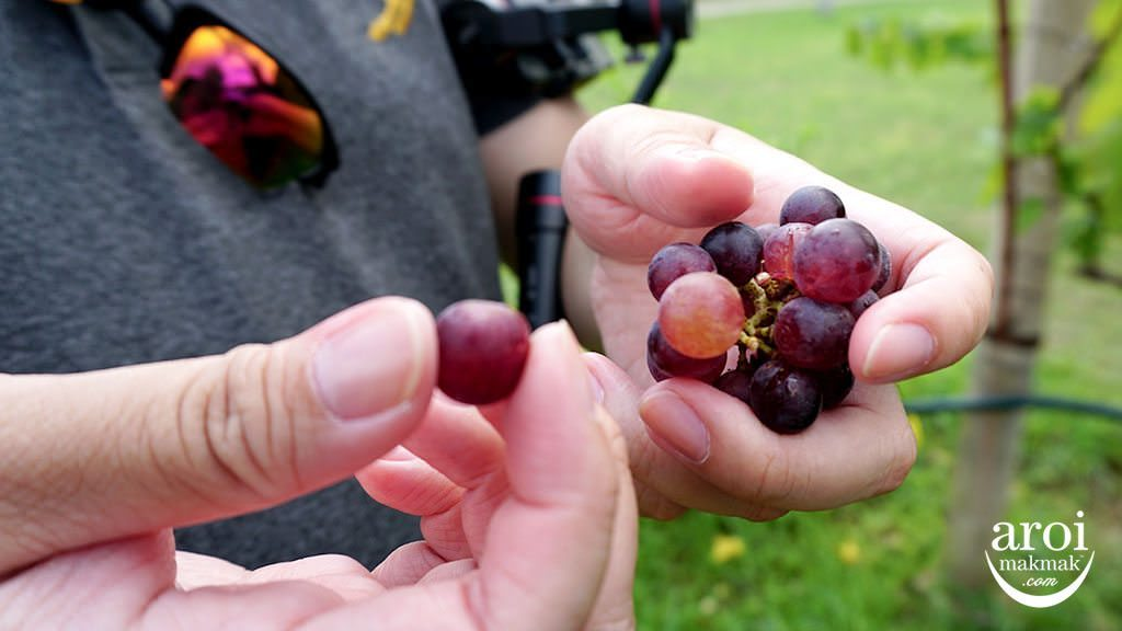 PBValley_grapes