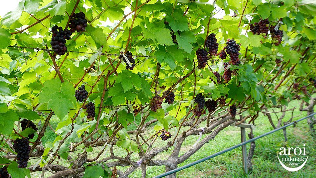 PBValley_tablegrapes