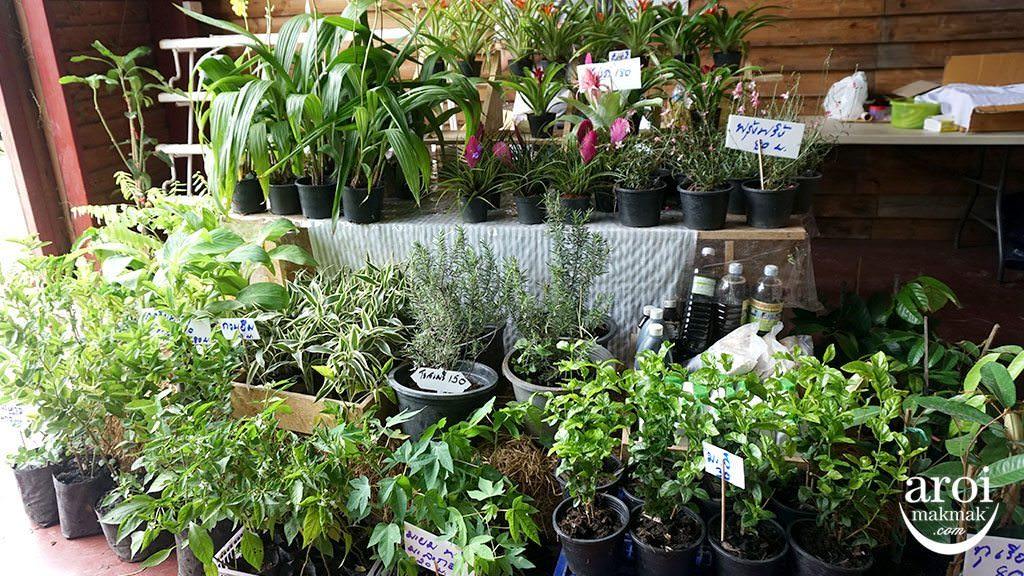 birderslodgefarmersmarket_plants