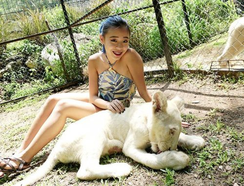 Bonanza Exotic Zoo Khao Yai – Feed and Hug a Lion cub?