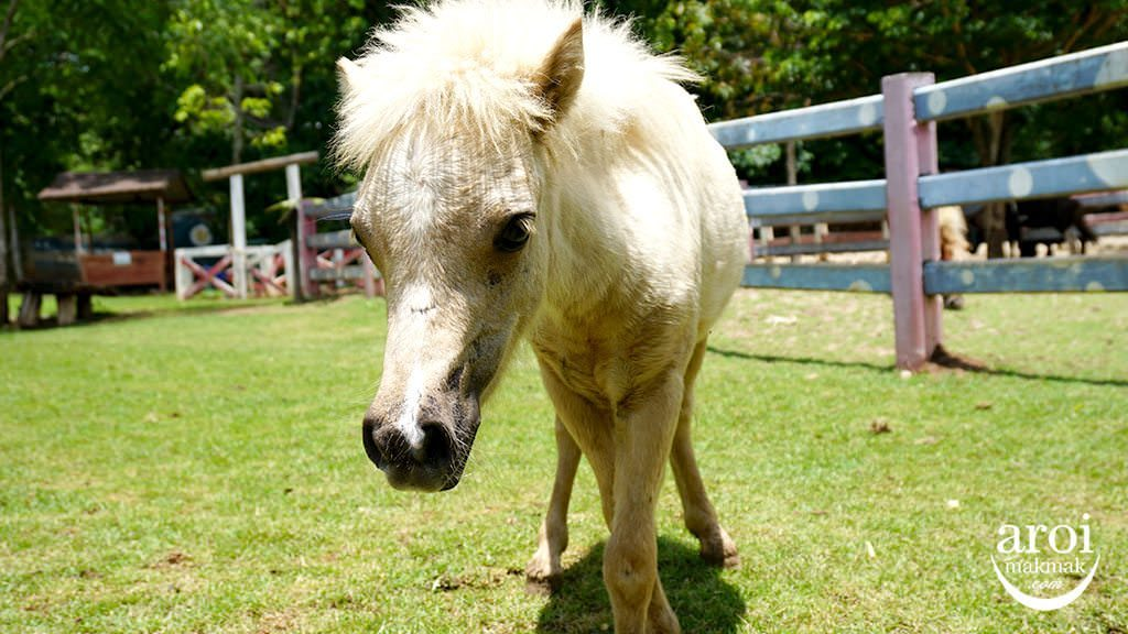 bonanzazoo_pony