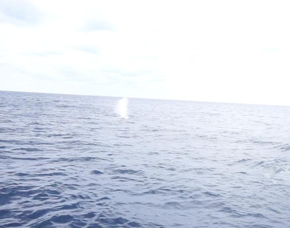 okinawa-whalewatching3