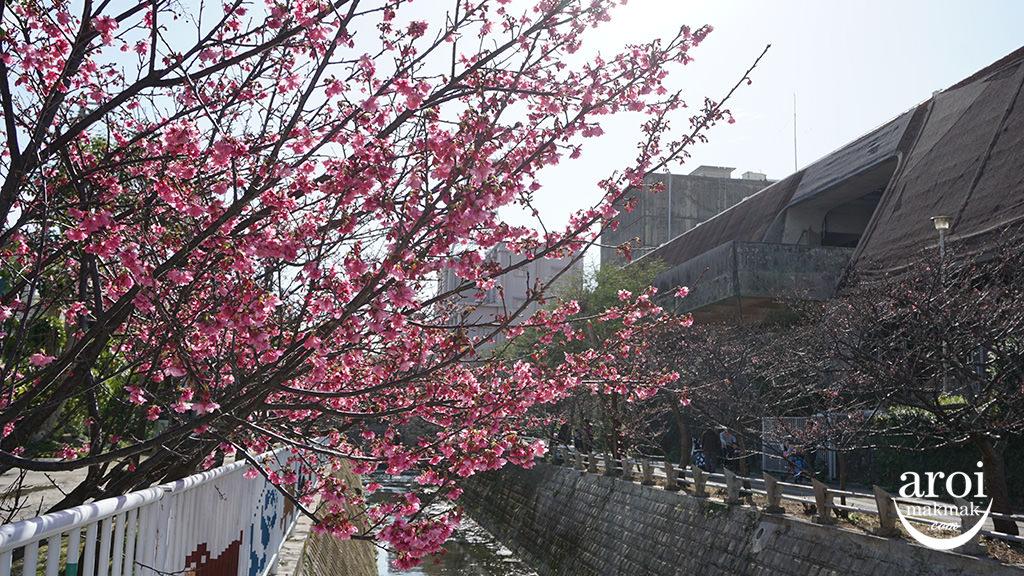 okinawa-yogipark1